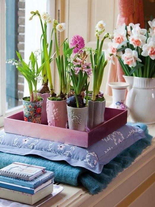Живые цветы дома