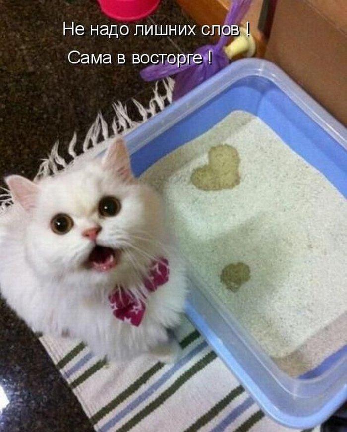 cat pet stores calgary