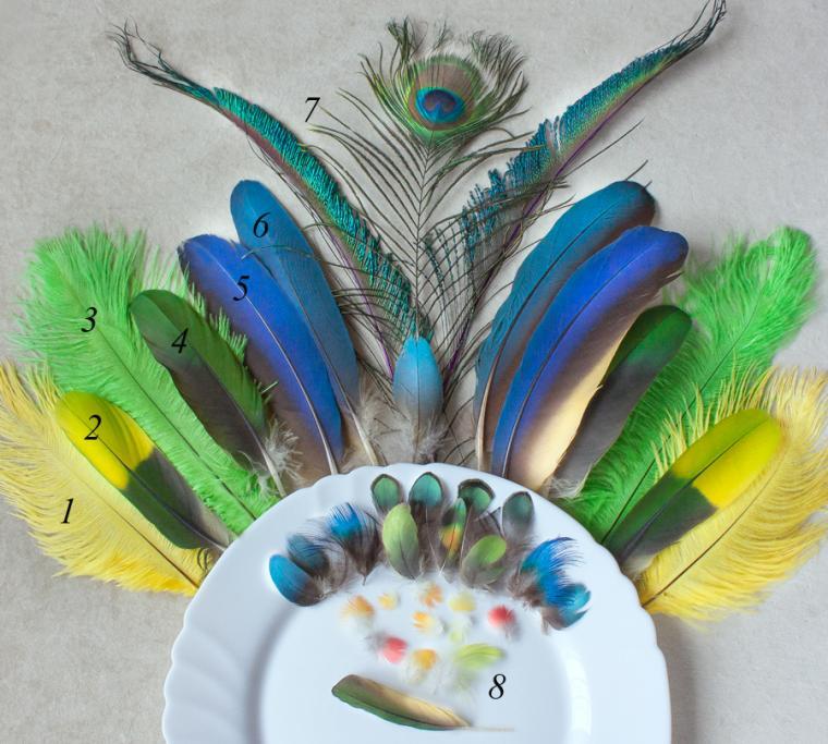 перья, для украшений, перо, экзотика