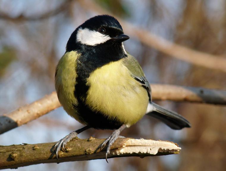 Каждой птице свой дом, фото № 8
