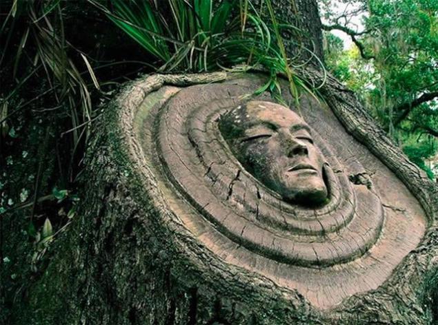 лица на дереве
