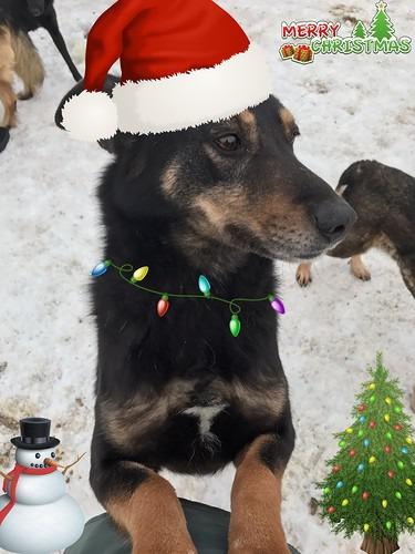 зима приют животных