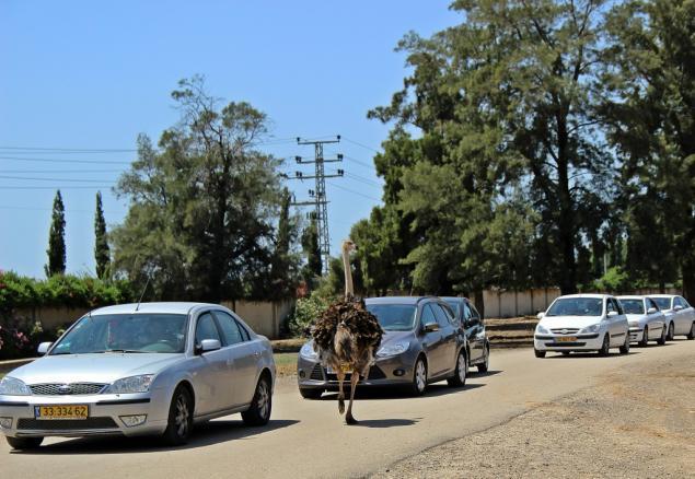 Гуляем по Рамат-Ганскому Сафари..., фото № 9