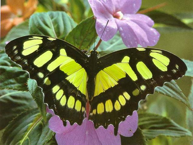 бабочкины посиделки