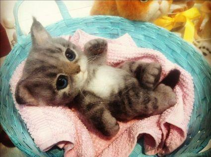 Валяние из шерсти котят