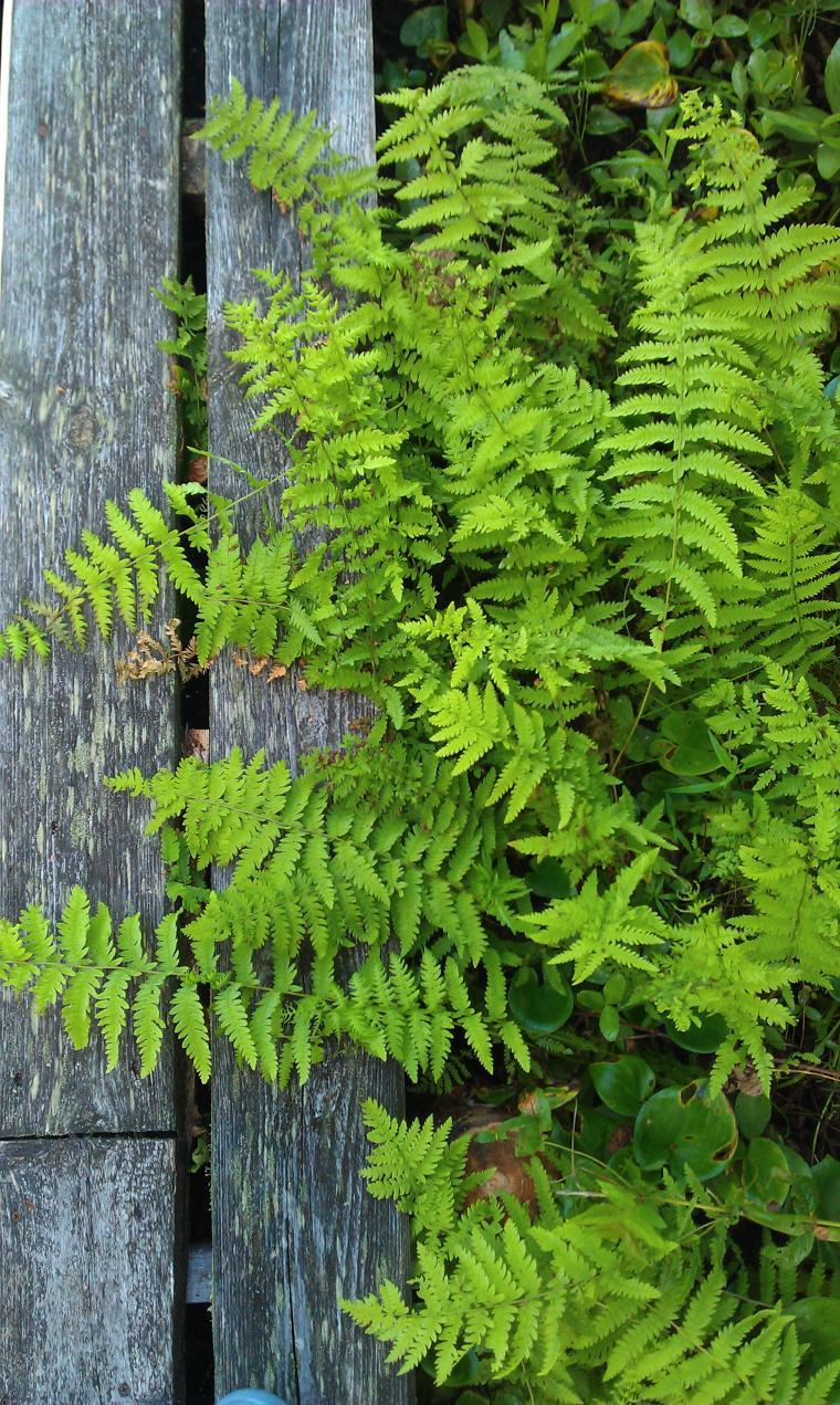 гербарий, листья, заготовки, новости магазина, новые работы, очень, осень, новинки магазина, лето