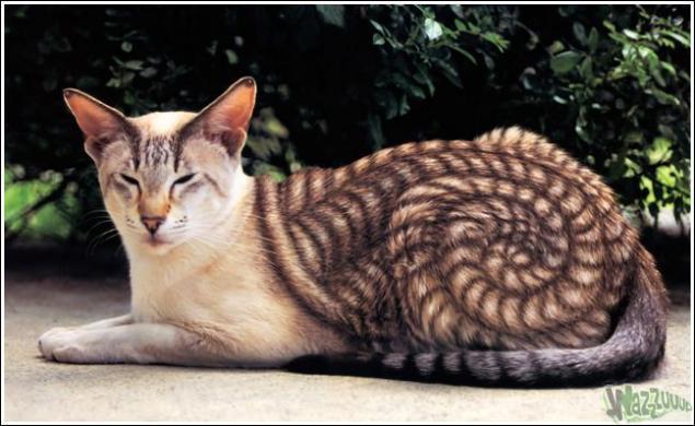 Зачем красить кошек?, фото № 5