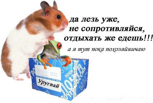 Сказочка про хомячка ))