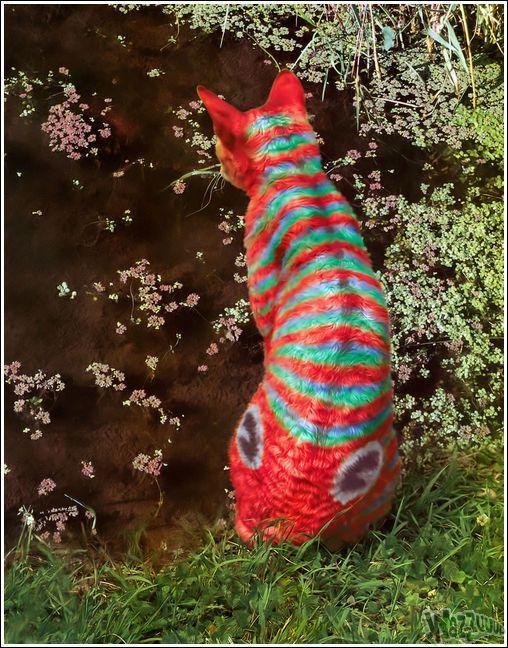 Зачем красить кошек?, фото № 3