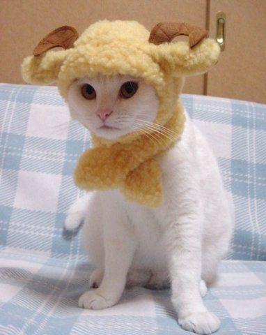нарядный кот