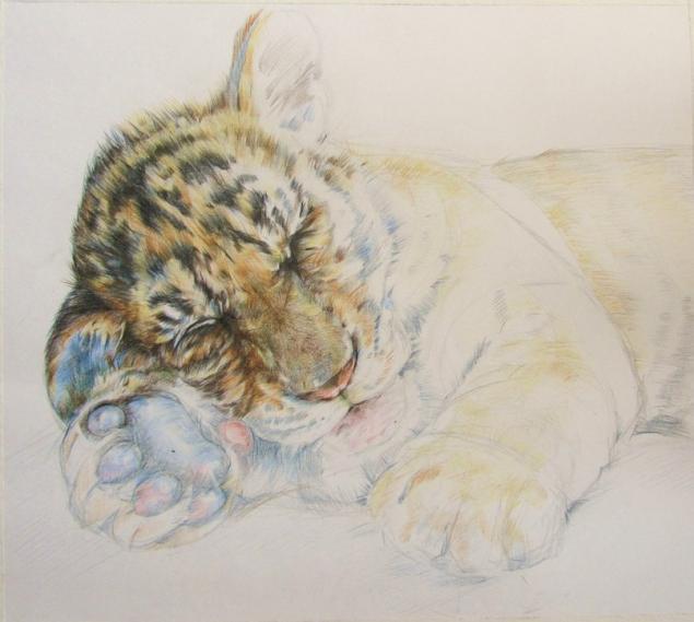 тигр, графика, цветные карандаши