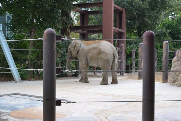 Дикий забег по Токио за 7 дней. День пятый. Зоопарк Уэно и детские магазины., фото № 8