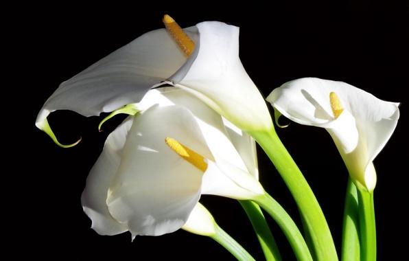 цветы для свадьбы, символика цветов