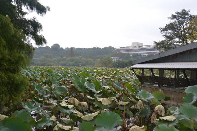 Дикий забег по Токио за 7 дней. День пятый. Зоопарк Уэно и детские магазины., фото № 60
