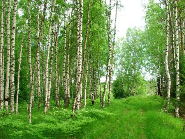 Русские края, фото № 30