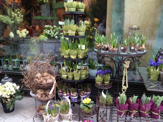 флористика, цветы, города, для дома