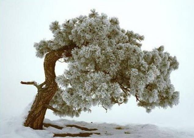 Морозной зимой, фото № 8