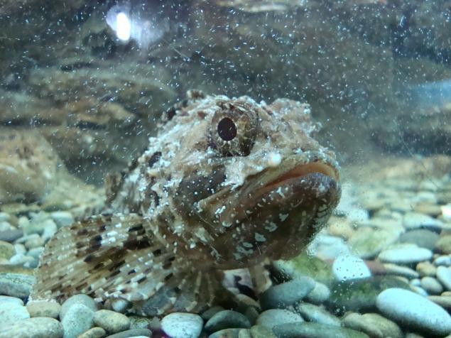 фотографии рыб