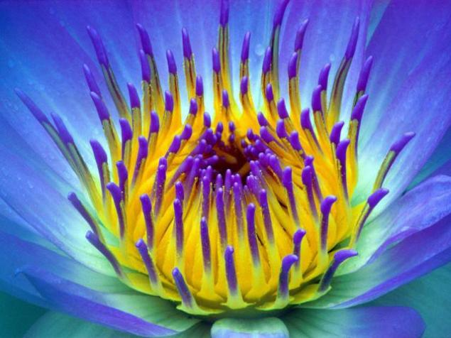 райские цветы фото