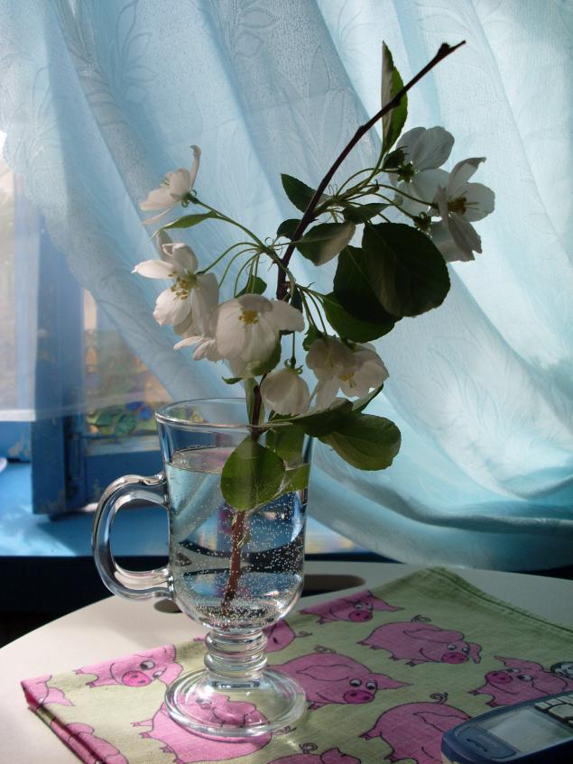 цветы, любовь