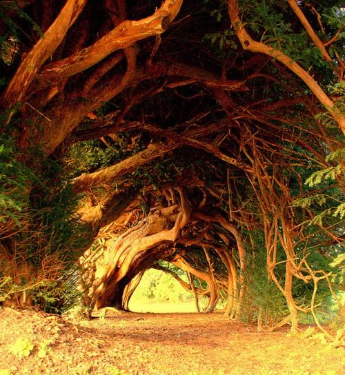 Bilo jednom jedno drvo - Page 2 120919164628