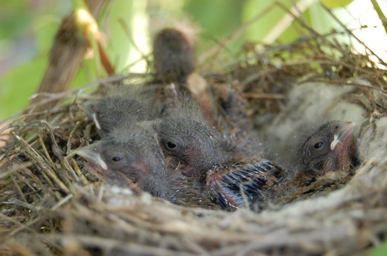 эко, гнездо