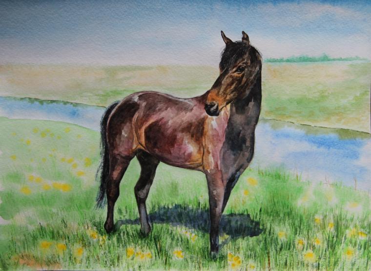 акварельная живопись, живопись, лошадь, кони