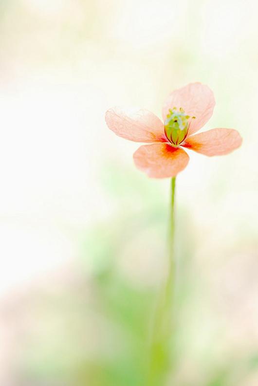 красота нежные цветы