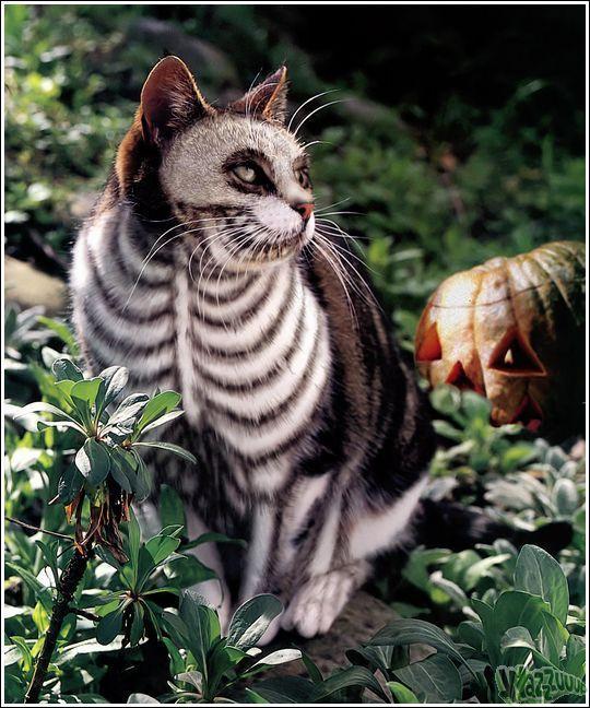 Что если покрасить кота