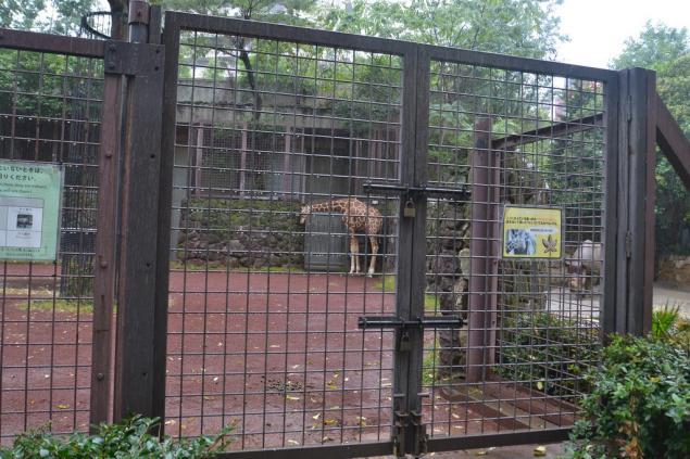 Дикий забег по Токио за 7 дней. День пятый. Зоопарк Уэно и детские магазины., фото № 48