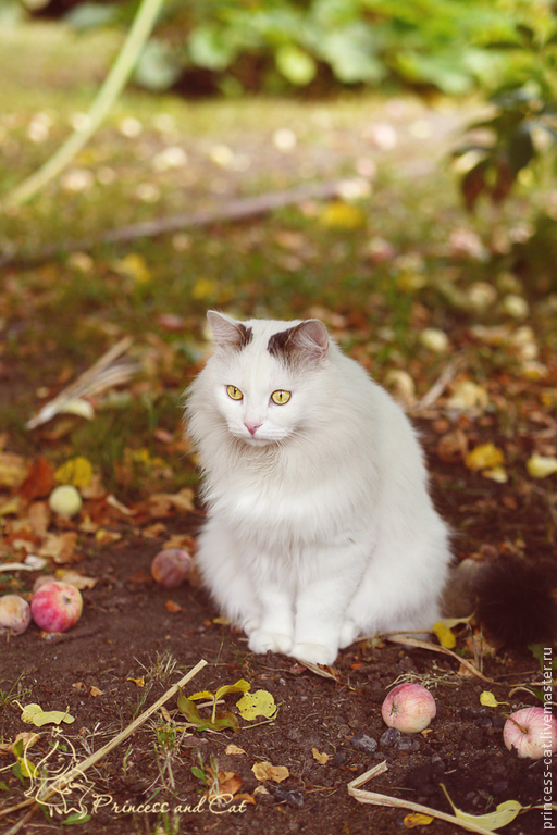 красивый кот, фото животных