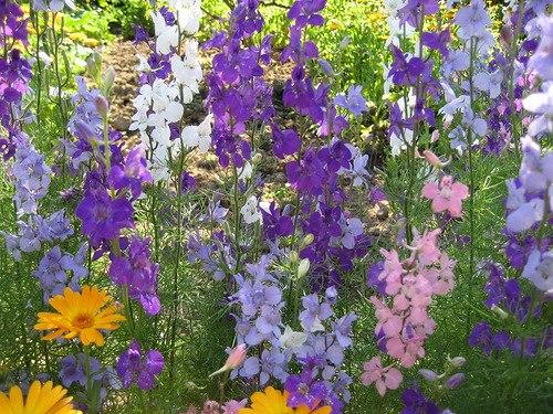 цветы, сухие травы