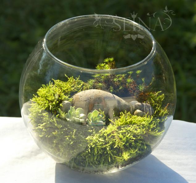 Сад в круглом аквариуме