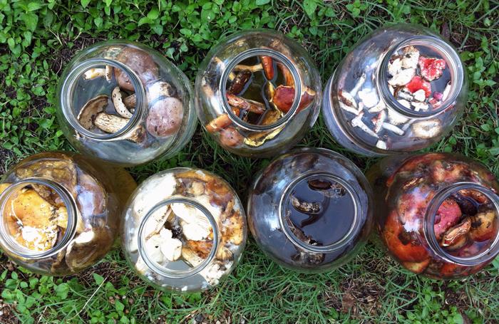 крашение, крашение грибами
