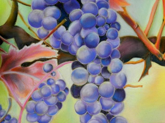 Виноград рисуют пастелью 3