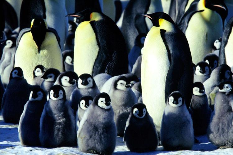 факты о пингвинах
