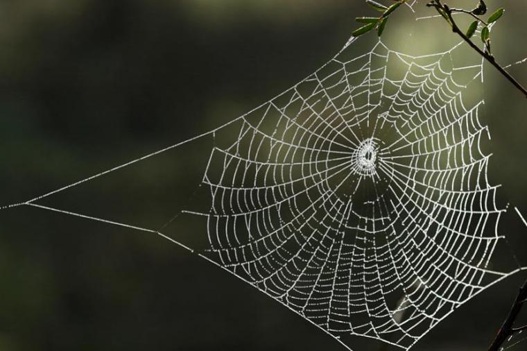Cum să scapi definitiv de păianjenii din locuință