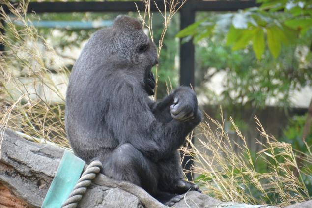 Дикий забег по Токио за 7 дней. День пятый. Зоопарк Уэно и детские магазины., фото № 17