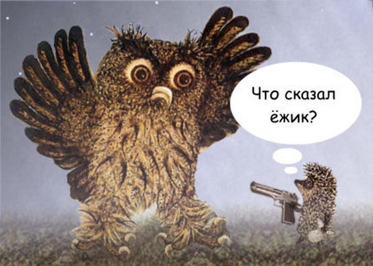 Смешные фото ежей и сов