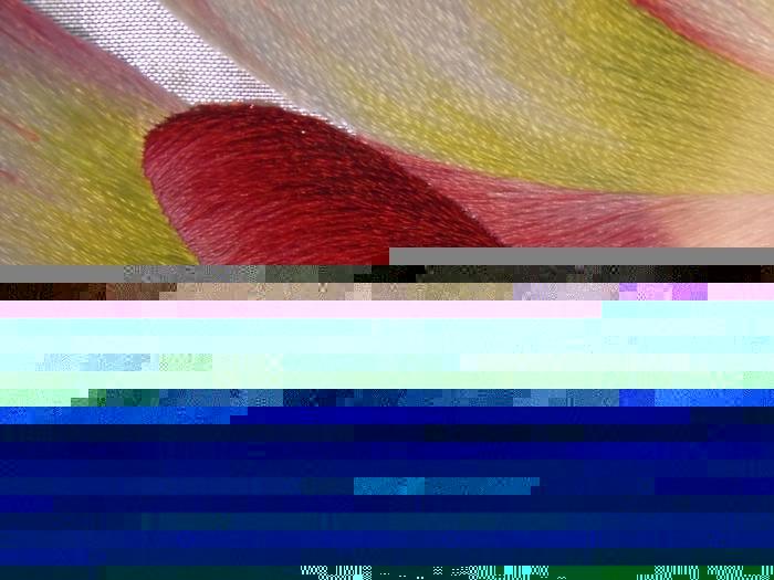 5327105_DSCN1243 (700x525, 294Kb)