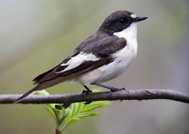 Каждой птице свой дом, фото № 11