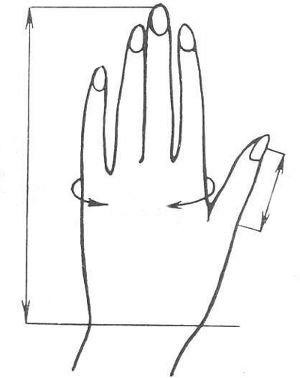 размеры, параметры руки