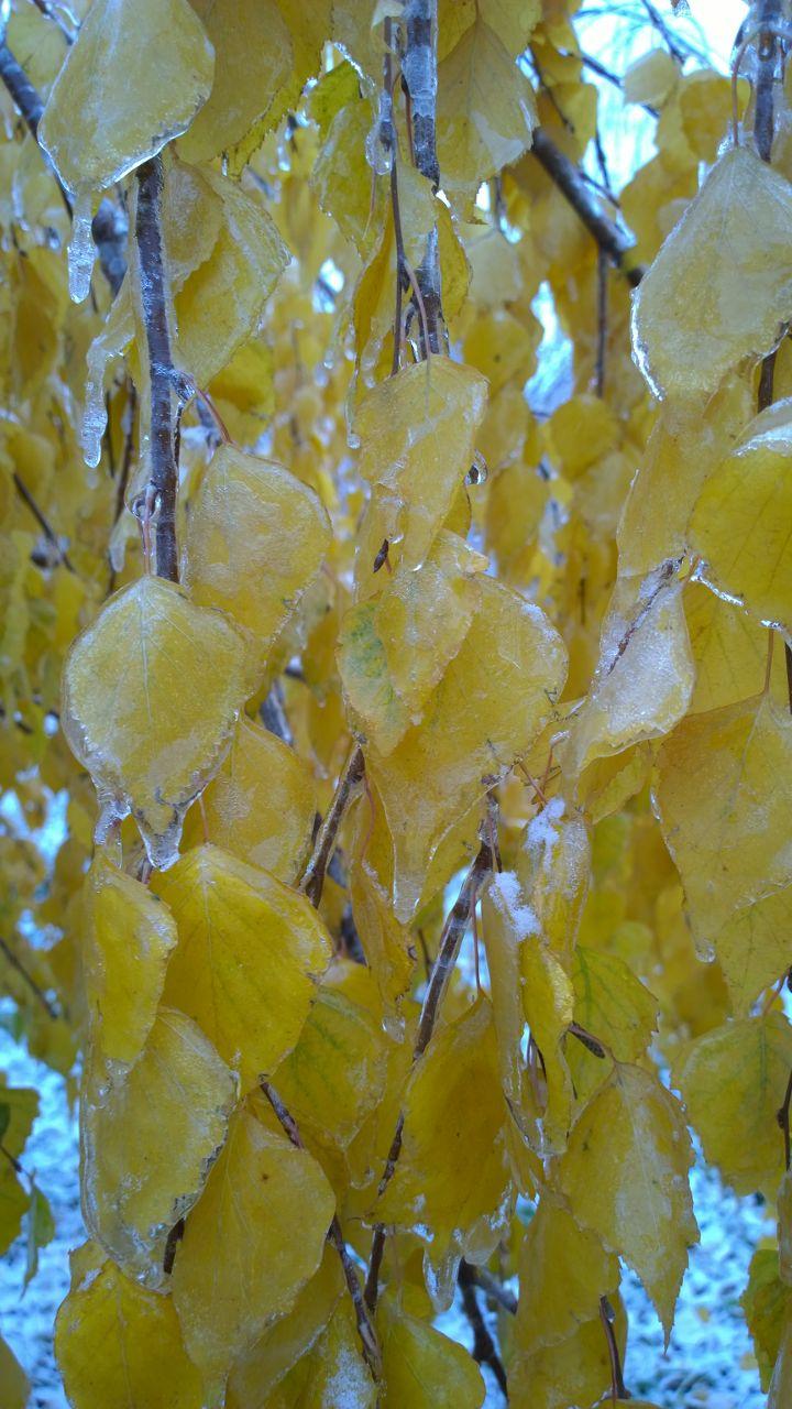 осень 2014, осенние листья
