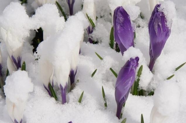 весна 2014, весеннее настроение, весенние цветы, капель, рассказы про весну