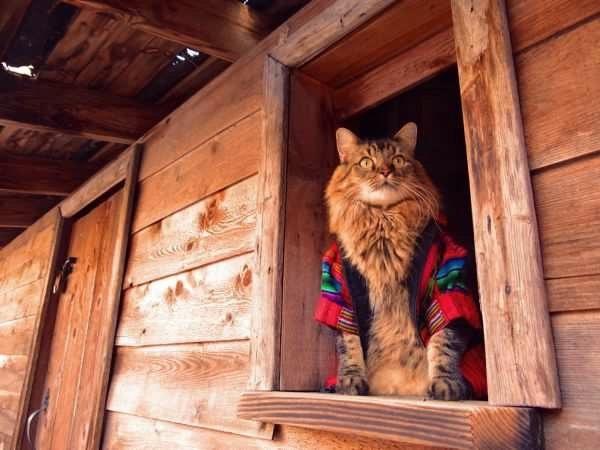 фотосессия кота