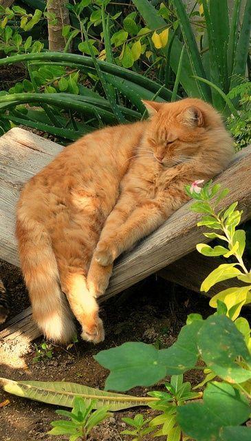 Котейке тоже нравится в саду и пете