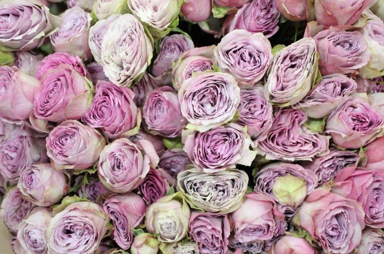 цветы, творческие идеи