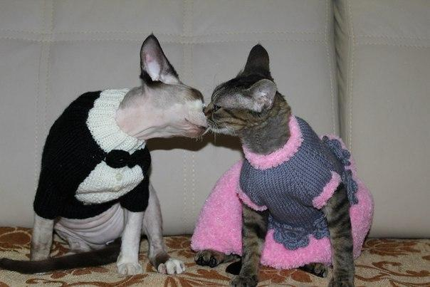 вязание на заказ, вязание спицами, вязаная одежда, одежда для кошек, одежда для сфинксов, вязаный свитер, вязаный комбез, выставочное платье, вязаное платье для кошки, одежда из полушерсти