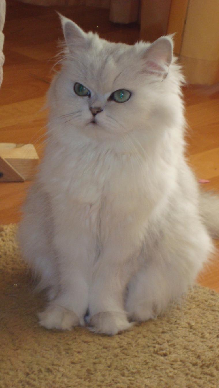 кошка, котенок, мои хокку