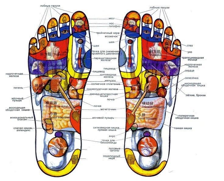 На человеческом теле, а в особенности на ладонях, ступнях и ушах, есть масса точек, которые отвечают за все органы